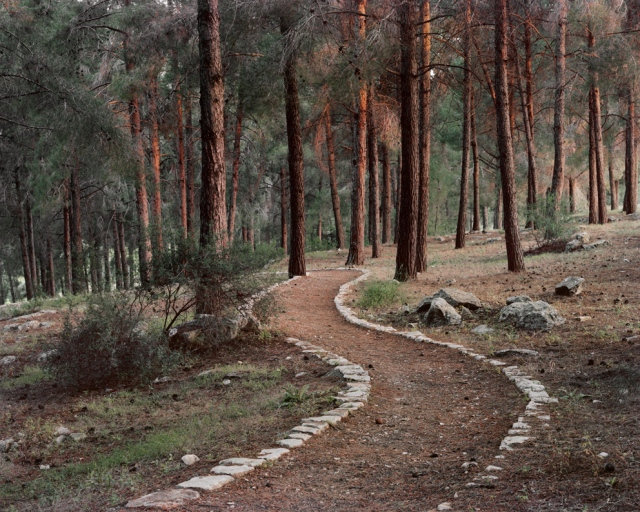 A trail at Ein zeitim (olive spring) national park, the name is an arab name taken from the arab village that was located near by, the only remains are the bricks that had been put together to form this trail in the woods. © Roei Greenberg